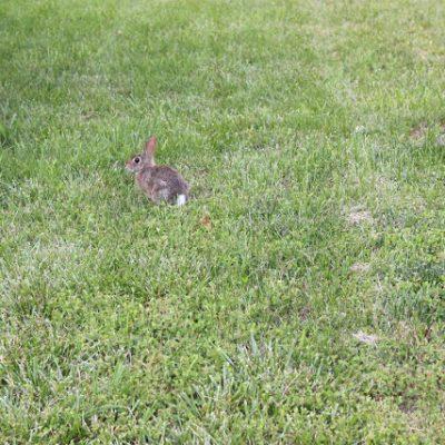 Shooting Bunnies