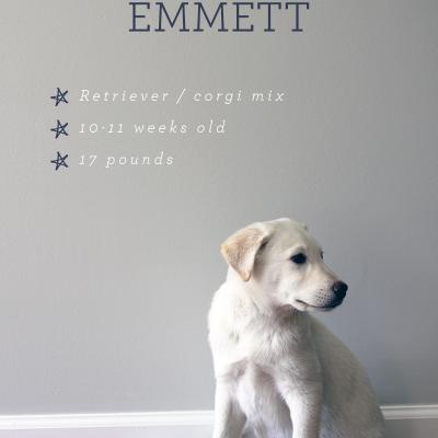 Meet Emmett